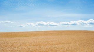 青空の下に広がる草原