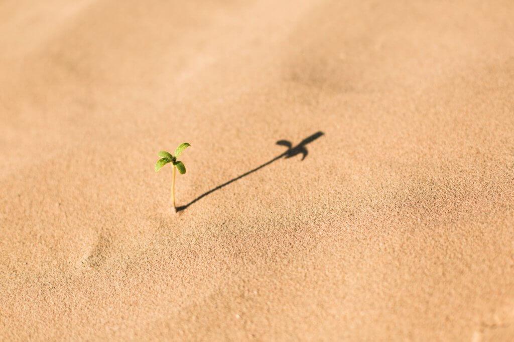 砂漠に芽生える植物