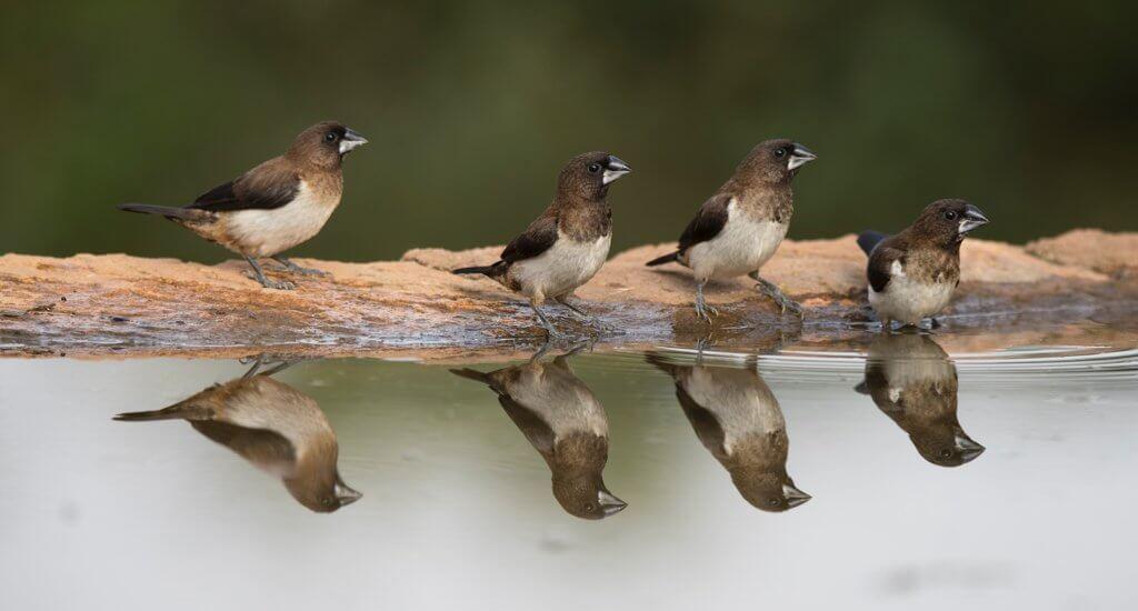 水辺に並んでいる小鳥