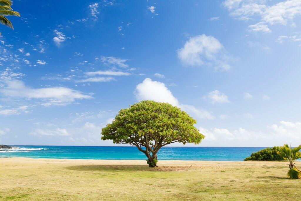 大きな幅広の木