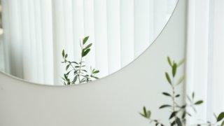 鏡に映る植物